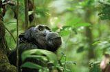 Kino: Kinotipp: Schimpansen - Bild 9