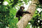 Kino: Kinotipp: Schimpansen - Bild 12