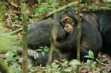 Kino: Kinotipp: Schimpansen - Bild 14