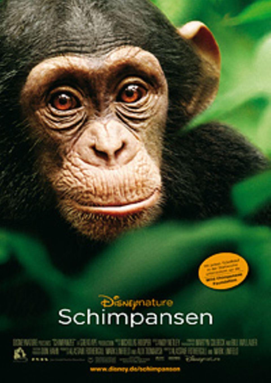 """Kino: Lasst euch von dem Kinofilm """"Schimpansen"""" in den afrikanischen Regenwald entführen"""