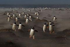 Pinguinlauf