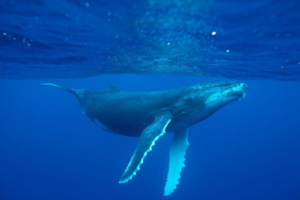 """Schutz für Wale: """"Wir ignorieren die wissenschaftlichen Fakten"""""""