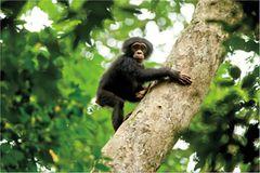 """INTERVIEW: Kinostart: """"Schimpansen"""""""
