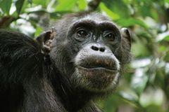 """INTERVIEW: Kinostart: """"Schimpansen"""" - Bild 4"""