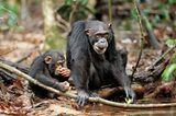 """INTERVIEW: Kinostart: """"Schimpansen"""" - Bild 5"""