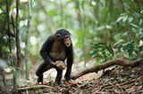 """INTERVIEW: Kinostart: """"Schimpansen"""" - Bild 7"""