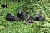 """INTERVIEW: Kinostart: """"Schimpansen"""" - Bild 11"""