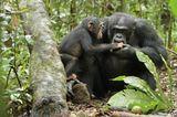 """INTERVIEW: Kinostart: """"Schimpansen"""" - Bild 15"""