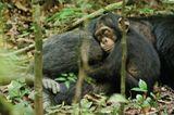 """INTERVIEW: Kinostart: """"Schimpansen"""" - Bild 16"""