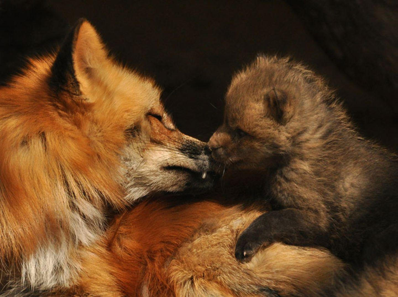 Füchse: Die Gejagten - Bild 3