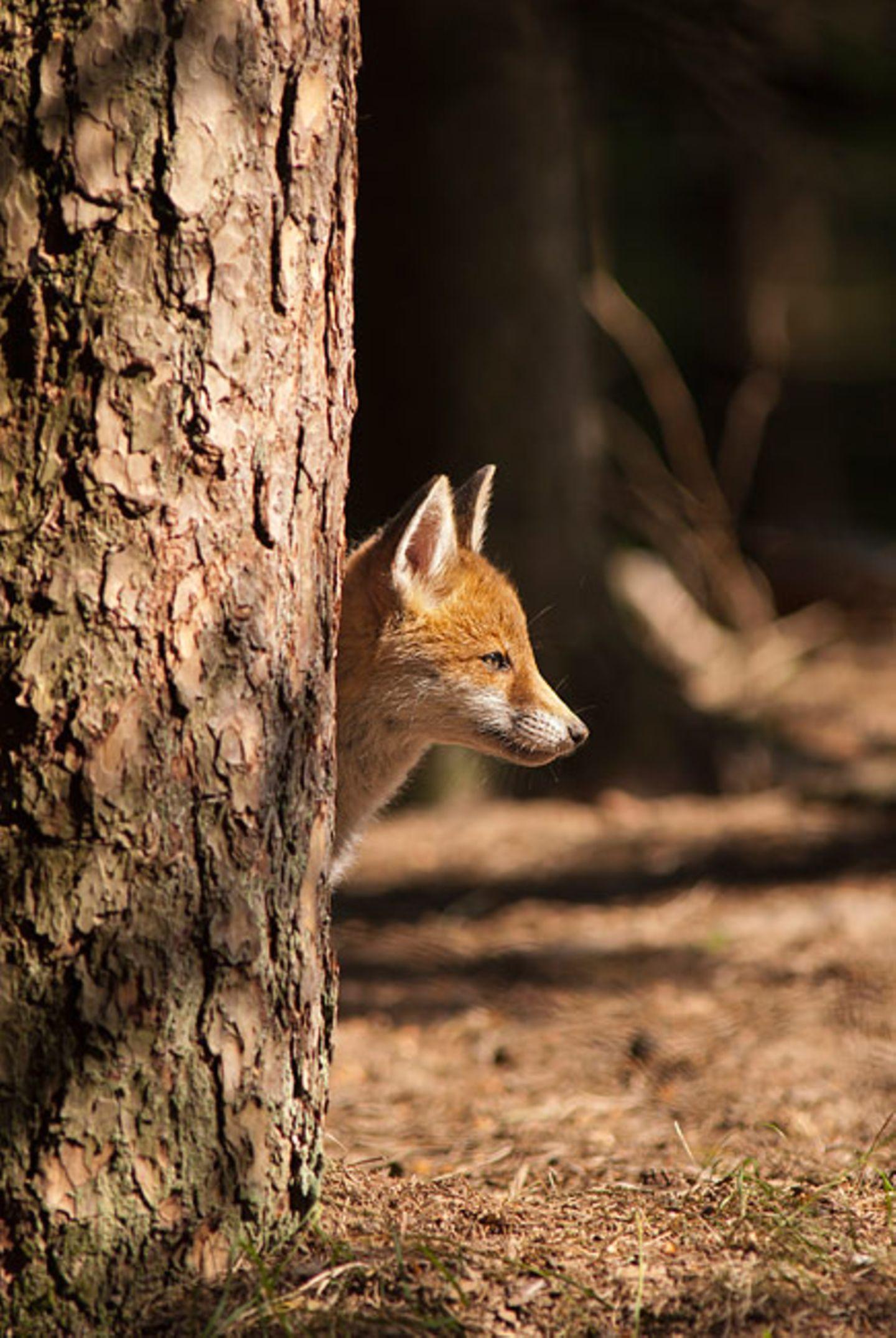 Füchse: Die Gejagten - Bild 4