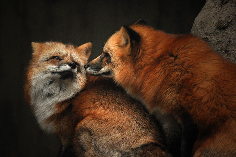 Füchse: Die Gejagten - Bild 5