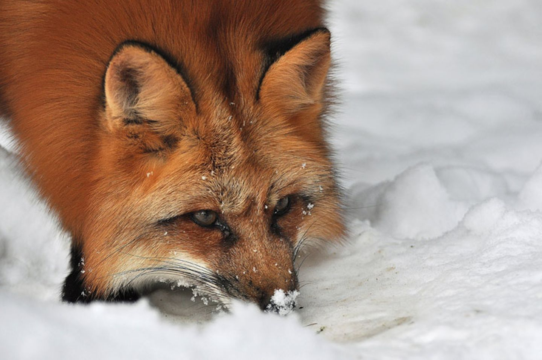 Füchse: Die Gejagten - Bild 6