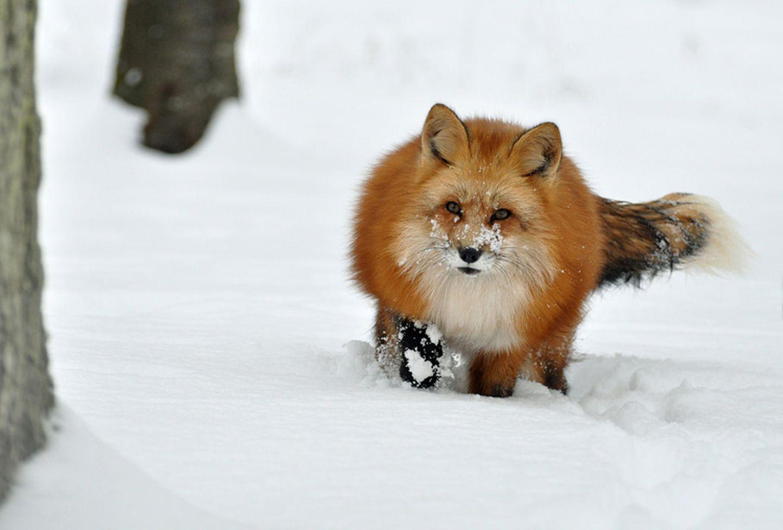 Füchse: Die Gejagten - Bild 7
