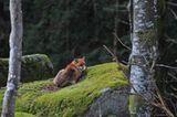 Füchse: Die Gejagten - Bild 8