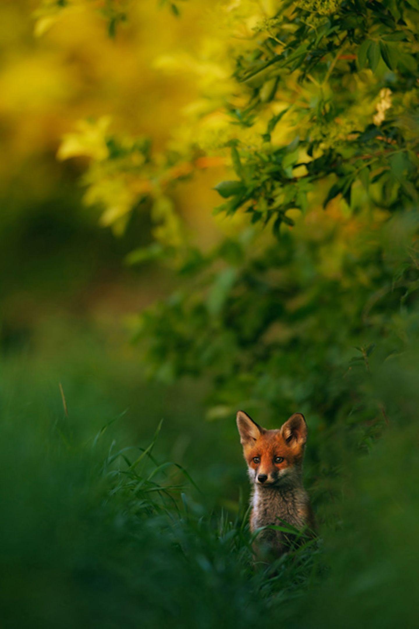 18-Jähriger wird Naturfotograf des Jahres!