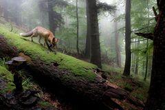 18-Jähriger wird Naturfotograf des Jahres! - Bild 4
