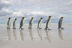 Parade der Pinguine