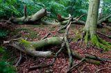 Serrahn im Müritz-Nationalpark