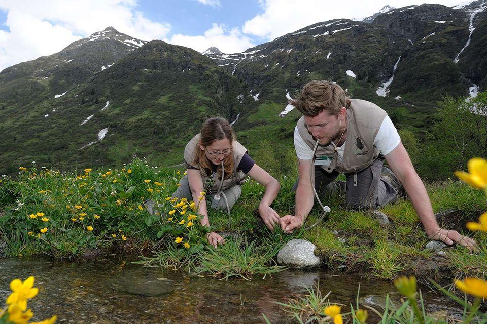 Artenvielfalt: 15. GEO-Tag in Tirol