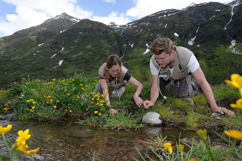 GEO-Tag der Artenvielfalt im Nationalpark Hohe Tauern 2013