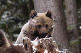 Eine Waisenstation für Bären - Bild 2