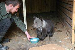 Eine Waisenstation für Bären - Bild 3