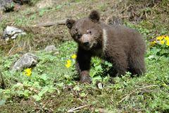 Eine Waisenstation für Bären - Bild 4