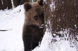 Eine Waisenstation für Bären - Bild 7