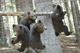 Eine Waisenstation für Bären - Bild 8