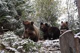 Eine Waisenstation für Bären - Bild 9