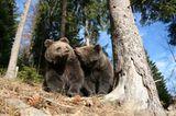 Eine Waisenstation für Bären - Bild 10