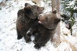 Eine Waisenstation für Bären - Bild 11