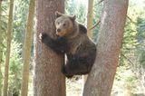 Eine Waisenstation für Bären - Bild 13