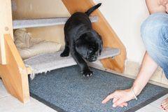 Hunde: Blindenhunde: Gespann mit guter Führung - Bild 2