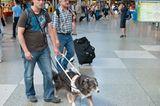 Hunde: Blindenhunde: Gespann mit guter Führung - Bild 4