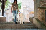 Hunde: Blindenhunde: Gespann mit guter Führung - Bild 6
