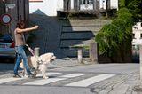 Hunde: Blindenhunde: Gespann mit guter Führung - Bild 7