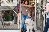 Hunde: Blindenhunde: Gespann mit guter Führung - Bild 8