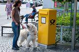 Hunde: Blindenhunde: Gespann mit guter Führung - Bild 9