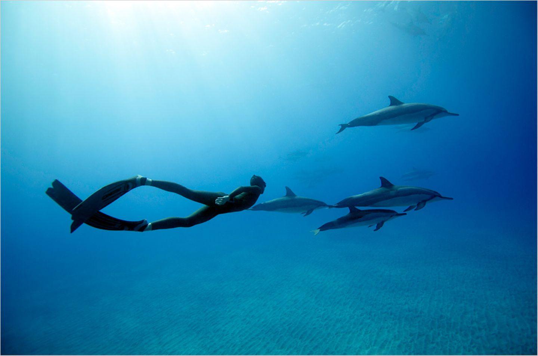 "Apnoe-Tauchen: ""Freediven fördert die mentale Stärke"""