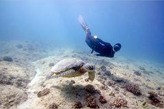 "Apnoe-Tauchen: ""Freediven fördert die mentale Stärke"" - Bild 2"