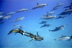 "Apnoe-Tauchen: ""Freediven fördert die mentale Stärke"" - Bild 4"