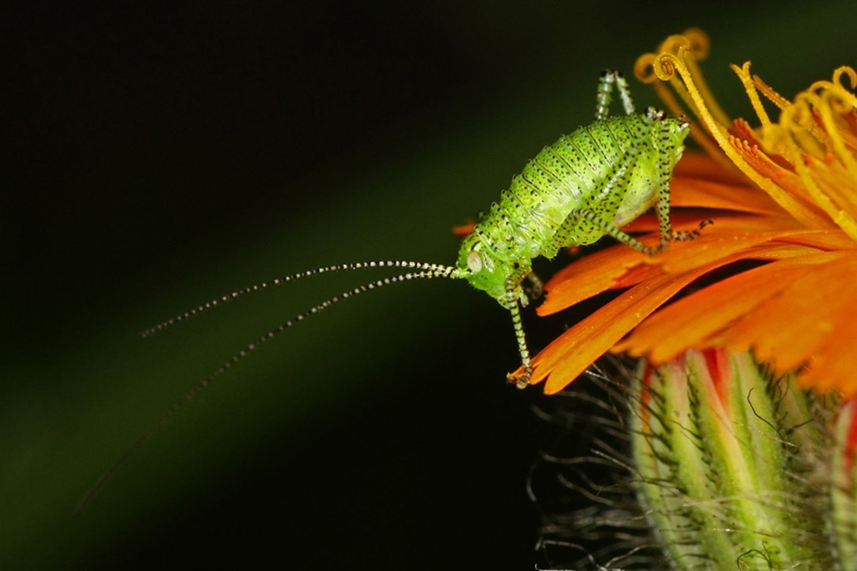 Fotogalerie: Biologische Vielfalt
