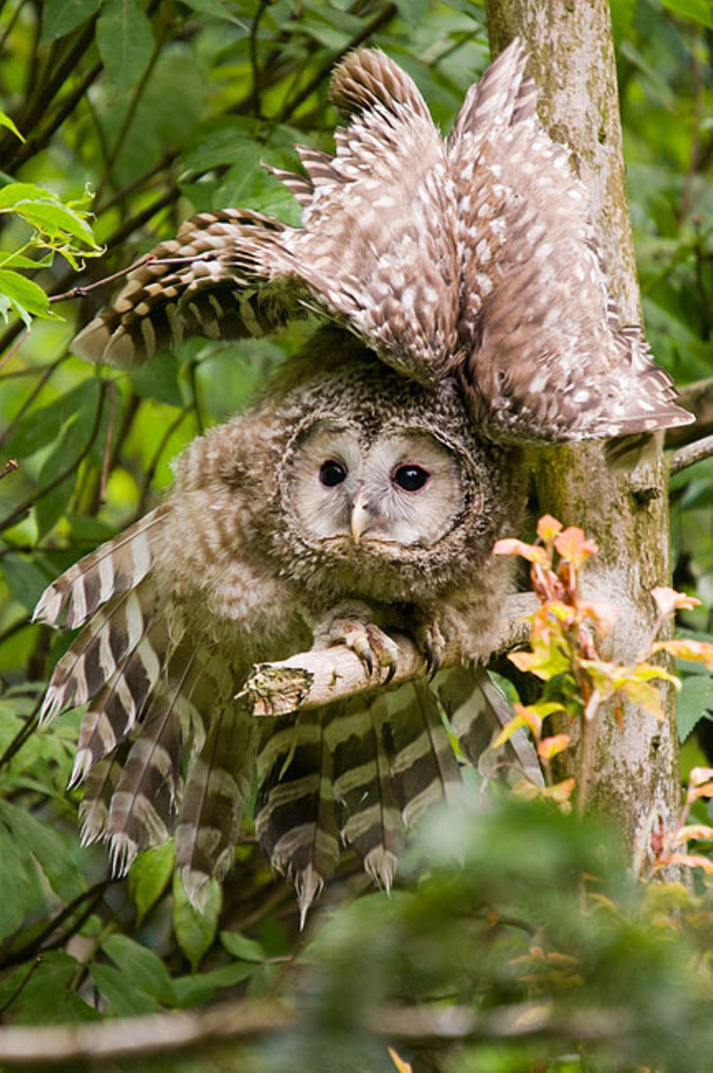 Fotogalerie: Biologische Vielfalt - Bild 2