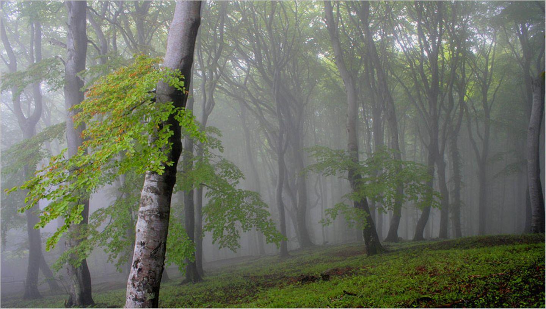 Fotogalerie: Biologische Vielfalt - Bild 3