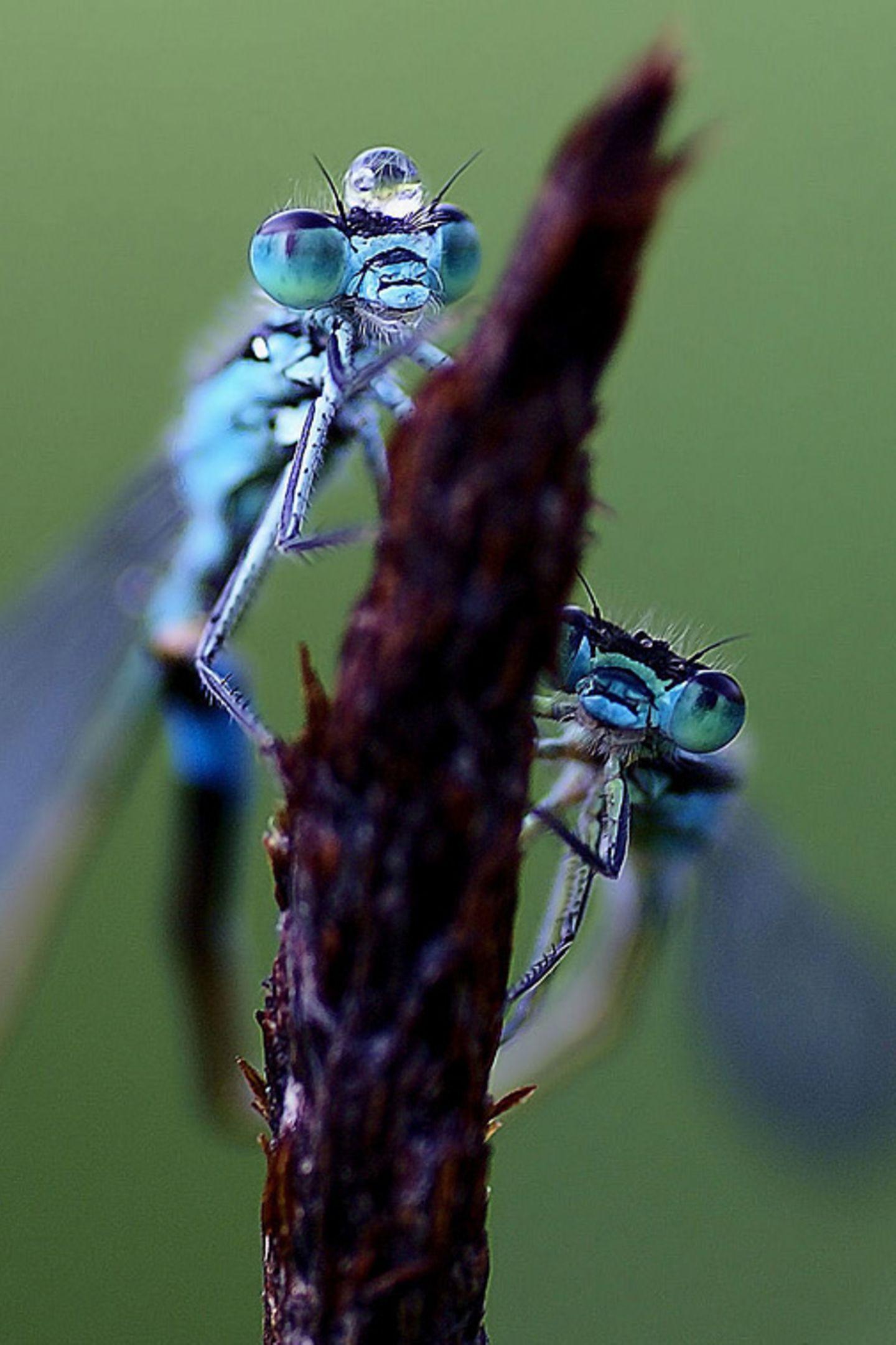 Fotogalerie: Biologische Vielfalt - Bild 4
