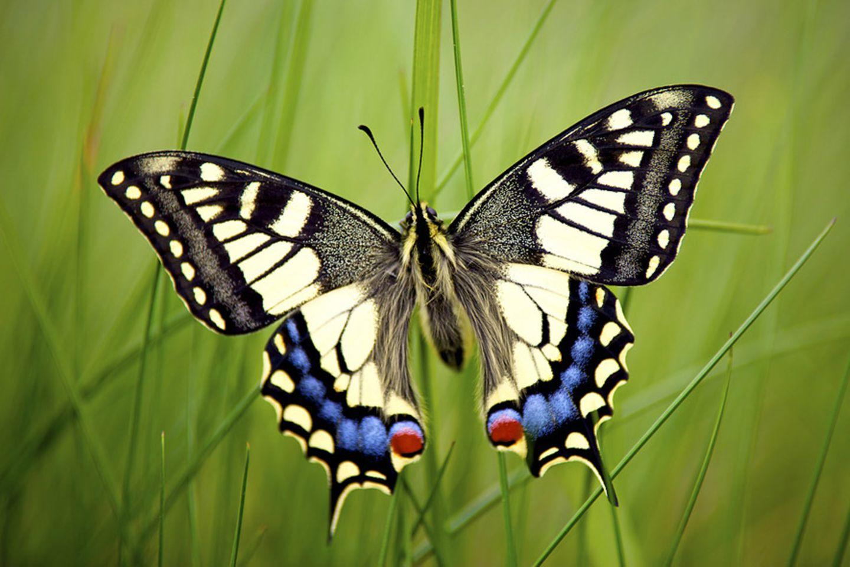 Fotogalerie: Biologische Vielfalt - Bild 5
