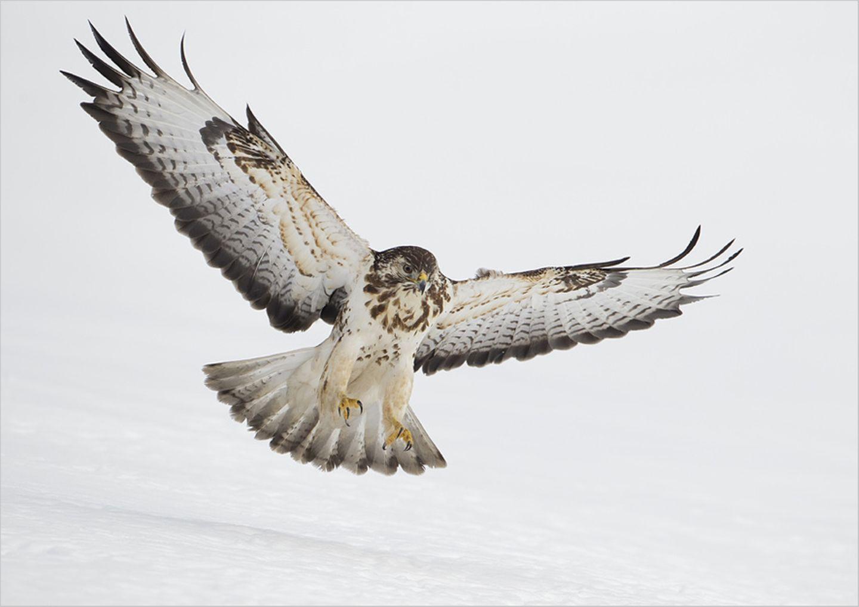 Fotogalerie: Biologische Vielfalt - Bild 6
