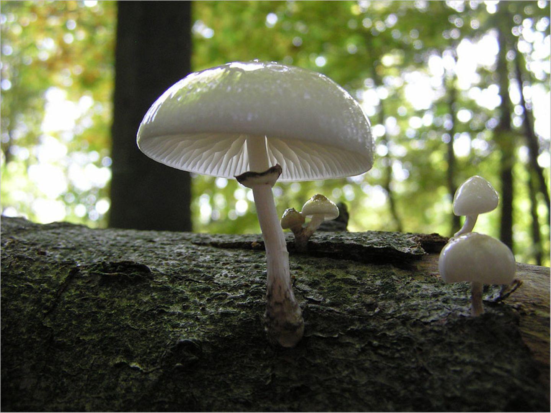 Fotogalerie: Biologische Vielfalt - Bild 8